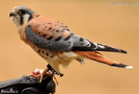 پرنده های زیبای دنیا + تصاویر