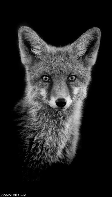 پرتره سیاه و سفید حیوانات