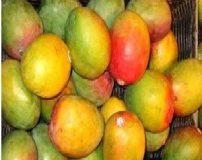 آشنایی با خاصیت های درخت کنار و میوه اش