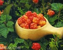 میوه های استوایی که تا کنون ایرانیان ندیده اند + تصاویر
