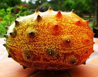 میوه هایی شگفت انگیز با طعم های عجیب و غریب + تصاویر