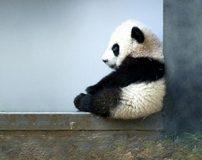 تصاویری از دوست داشتنی ترین حیوانات دنیا