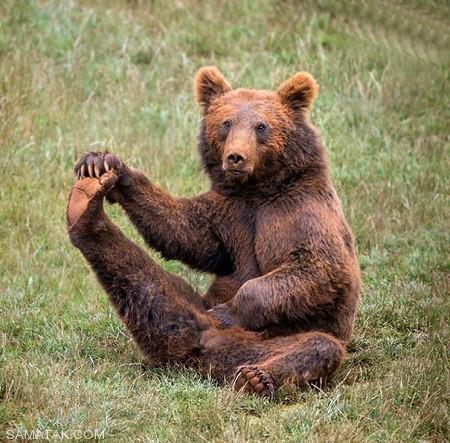 تصاویری از ورزش یوگا حیوانات