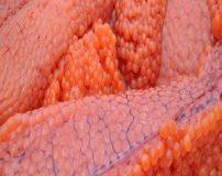 بررسی زیان های مصرف بیش از حد اشپل ماهی