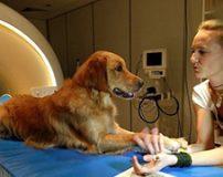سگ ها حرف شما را میفهمند + تصاویر