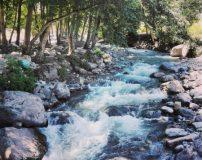 عکس های طبیعت زیبای جنگل دو هزار سه هزار تنکابن