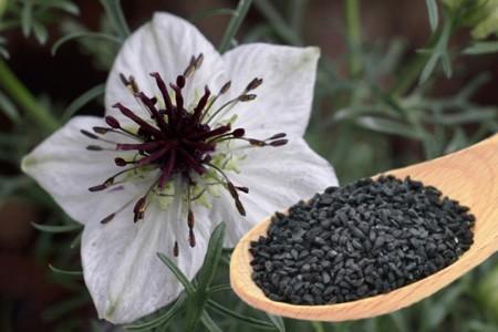 طریقه کاشت و روش نگهداری از گیاه سیاه دانه
