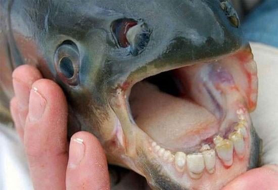 عکس های دهان وحشتناک و ترسناک حیوانات و جانوران