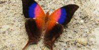 پروانه منحصر به فرد با بال های زیبا و رنگی + تصاویر