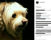 پیام های تسلیت جالب در اینستاگرام برای مرگ سگ امیر جعفری