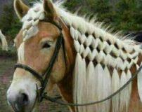 انواع مدل های زیبا و شیک یال اسب
