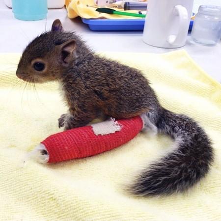 عکس های خنده دار گچ گرفتن دست و پای شکسته حیوانات