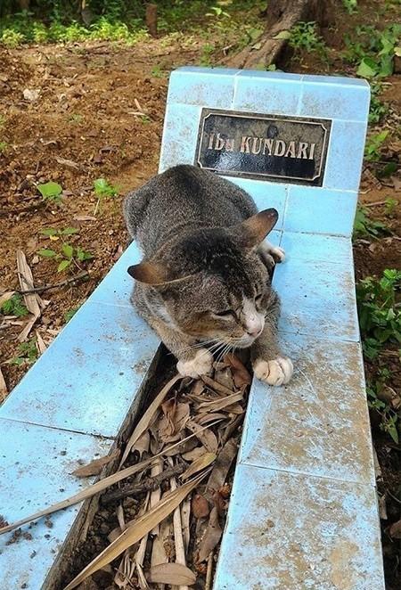 گربه با معرفت هر روز به سر قبر صاحبش می رود + تصاویر