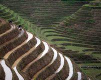 عکس های جالب ترین زمین های کشاورزی پله ای