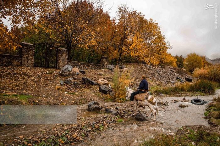 عکس پاییز در مشهد