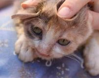 کودک هفت ساله ناجی بچه گربه زشت شد + تصاویر