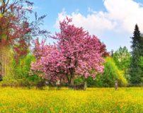 تصاویر درخت عجیب که چند نوع میوه مختلف دارد