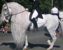 تصاویری از زیباترین اسب های دنیا