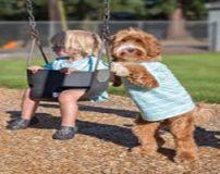 تصاویر حیرت انگیز دوستی و همبازی شدن پسر 3 ساله با سگ