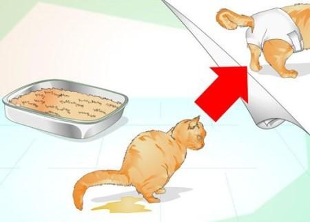 اقدامات ضروری برای درمان گربه مریض و بیمار