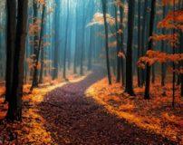 تصاویر بی نظیر و زیبا از طبیعت جمهوری چک