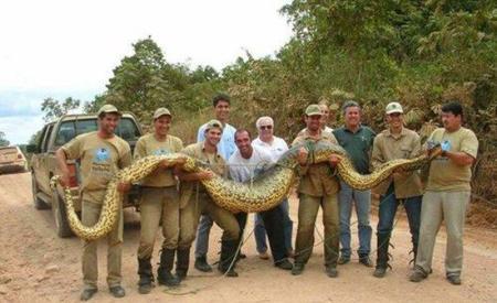 بزرگترین مار جهان با 2 تن وزن و 40 متر طول + تصاویر
