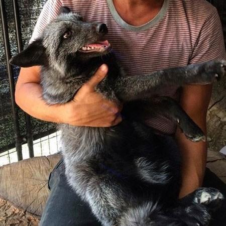 بغل کردن حیوانات شغل جدید مردم چین + تصاویر