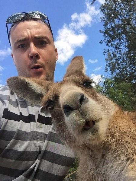 عکس های سلفی دسته جمعی حیوانات در حال خندیدن