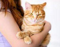 بیماری گربه ها (توکسوپلاسموز) چیست؟ + راه درمان
