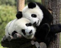 رفتارهای عاشقانه و جفت گیری حیوانات در طبیعت + تصاویر