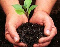 اس ام اس روز درختکاری جدید | پیام تبریک به مناسبت روز درختکاری