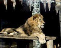 حیوانات وحشی در باغ وحش تهران + تصاویر