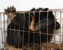 گریه حیوانات در زمان ناراحتی + تصاویر