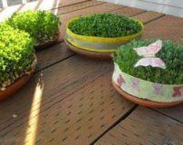 روشهای کاشت و نگهداری انواع سبزه نا