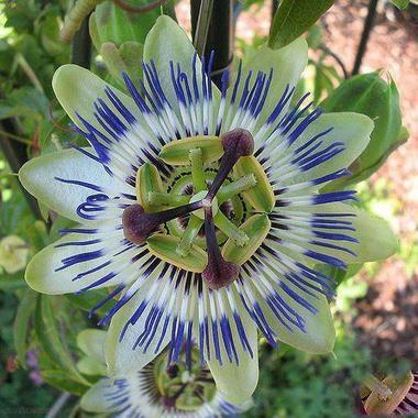 نادرترین گل های زیبا در دنیا + تصاویر