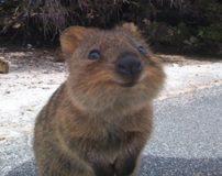 کوئوکا شادترین حیوان دنیا شناخته شد