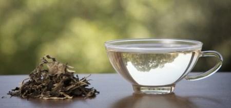 چند نوع چای چربی سوز برای کاهش وزن