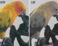 چشم گربه ها اجسام و انسان ها را این شکلی می بیند! (عکس)