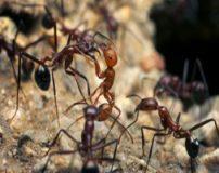 دنیای عجیب و باور نکردنی مورچه ها + تصاویر
