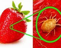 مواد غذایی زیر میکروسکوپ که باور نکردنی نیست