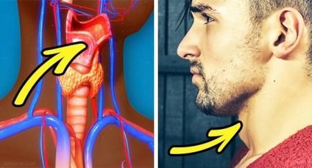 دانستنی های جالب در مورد بدن آقایان که از آن بی خبرید