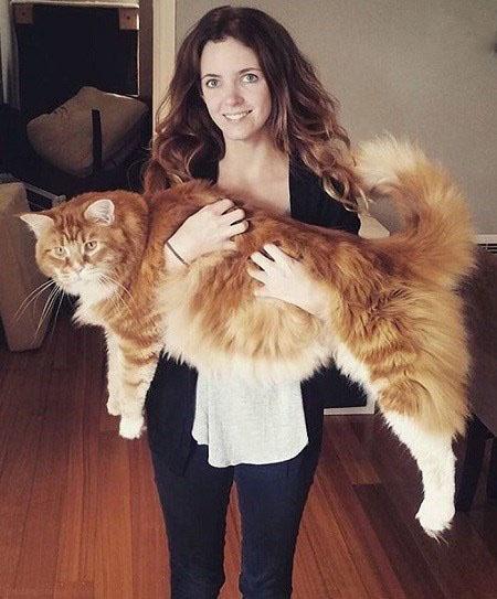 تصاویری از غول پیکرترین گربه جهان
