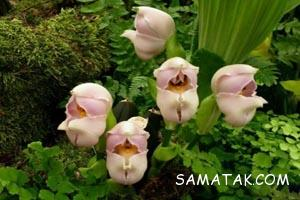 گل عجیب و نادر که شبیه نوزاد در گهواره است + تصاویر