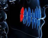 تحقیق در مورد اعضای بدن انسان