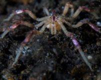 تحقیق درباره موجودات دریایی