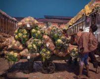 بزرگترین میدان تره بار و میوه جات جهان در قاره آسیا (عکس)