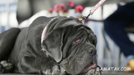 عکس های زشت ترین سگ دنیا