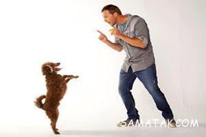 چگونه سگ تربیت کنیم