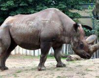 گونه های مختلف حیوانات درحال انقراض
