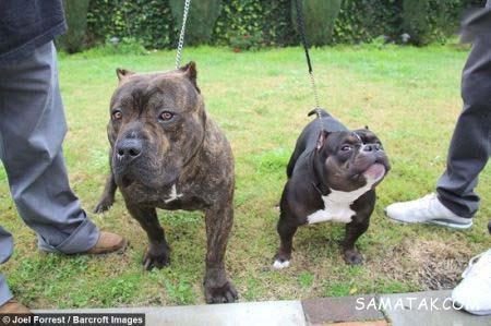 سگ جیبی چیست؟ + تصاویر